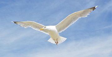 Meeuw in Blauwe Lucht van DoDiLa Foto's