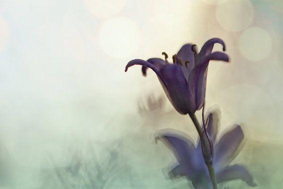 Bluebell in early evening light van Bob Daalder