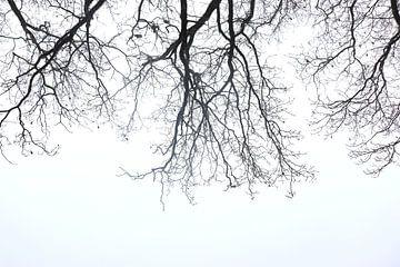 Stilleven boom van Manon Ruiter