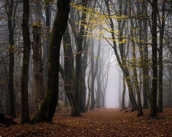 Loop onder de gele bladeren