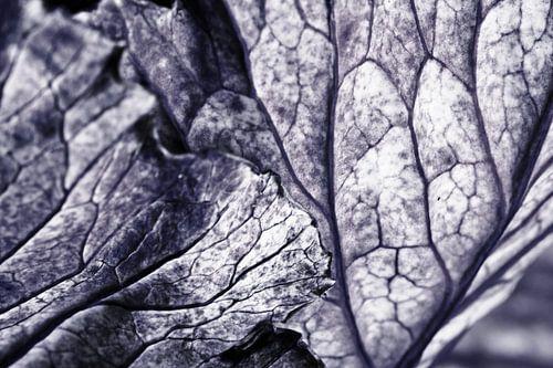 Geaderde bladeren van