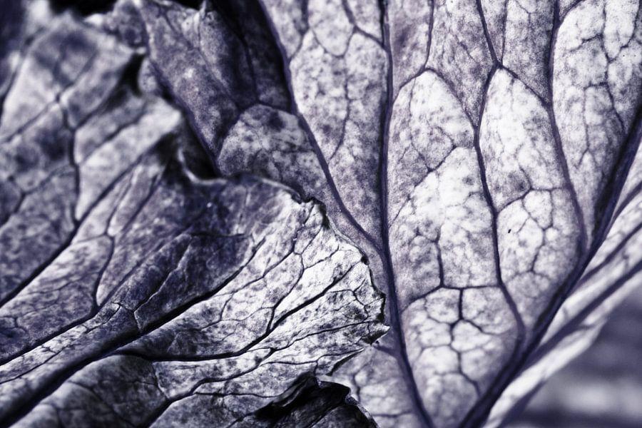 Geaderde bladeren van Henriette Mosselman