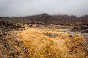 Zee van geel gras op de Kilimanjaro van Mickéle Godderis
