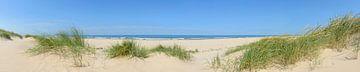 Duinen aan het strand met helmgras tijdens een mooie zomerdag aan het Noordzeestrand van
