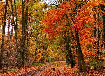 Herfst-Wandeling (Herfstkleuren) van