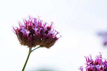 Feine Blume von Sandra Estupinan