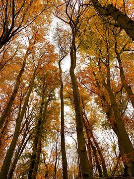 Herbstfarben in Elstwout von Apple Brenner
