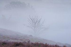 Boompje in de mist van