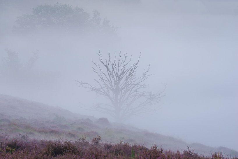 Boompje in de mist van Elroy Spelbos