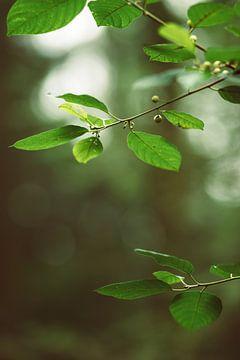 Groene bladeren van Veri Gutte