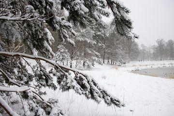 Met sneeuw bedekte tak in de winter van Marco Leeggangers