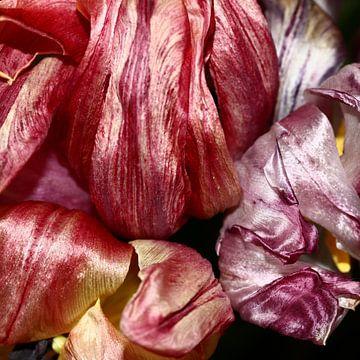 Blühende Tulpen geben eine wahre Farbpalette von Anne Ponsen