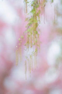 Dromen van een mooie lente. van Francis Dost