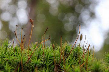 Close-up nature van Hermen Buurman