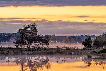 die goldene Landschaft von Dennis Carette