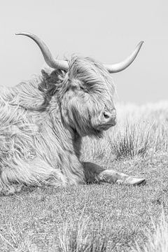 Schotse hooglander van Teuni's Dreams of Reality