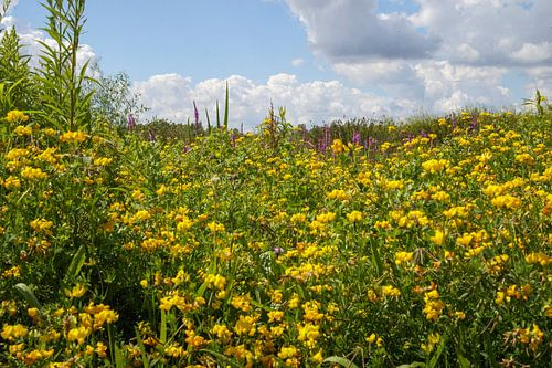 Kleurrijke zomer in Brabant