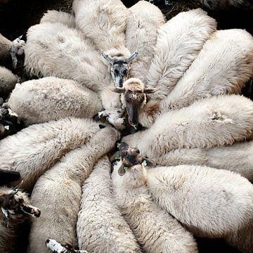 Wool Flower van Riekus Reinders