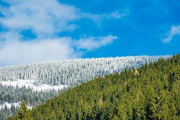 Winter im Riesengebirge bei Pec pod Snezkou, Tschechien von Rico Ködder