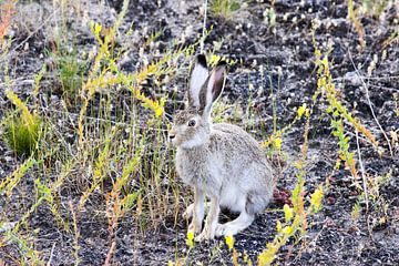 Der Hase ist wachsam zwischen den Pflanzen von Devin Meijer