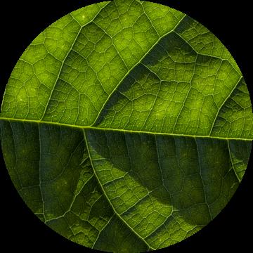 Avocado blad van Jip van de Nes