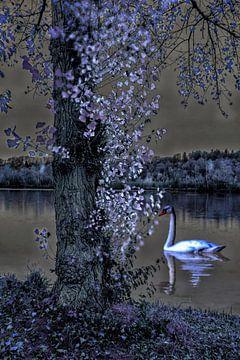 s Nachts bij het Zwanenmeer van Christine Nöhmeier