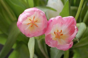 Tulpen van Marianna Pobedimova