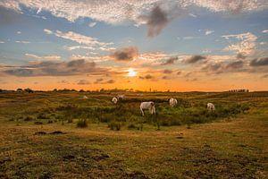 Zonsondergang westduin van Albert van der Spaan