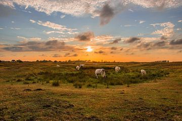 Zonsondergang westduin von Albert van der Spaan