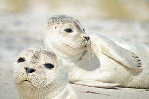Kleine Robben von Martina Fornal