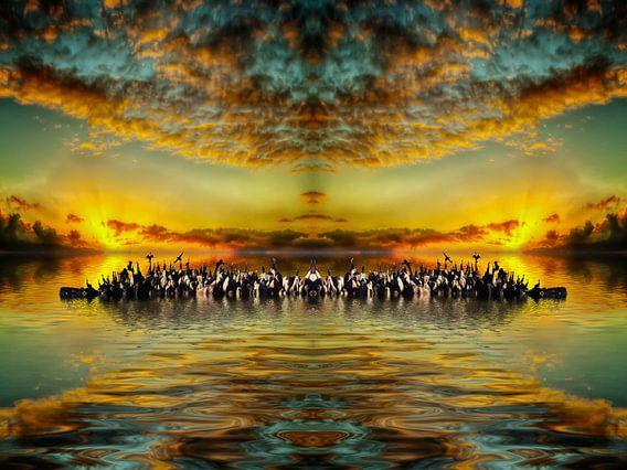 Cormorants on a desert island
