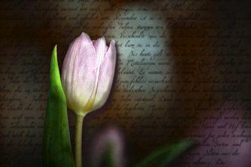 Tulp van Christiane Calmbacher