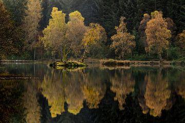 Symmetrische Bäume im Gegenlicht von Sam Mannaerts Natuurfotografie