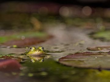 Herr Frosch von Diane van Veen