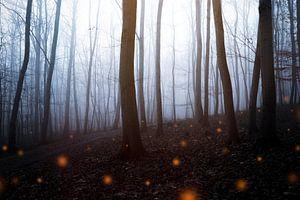 Mystischer Herbstwald