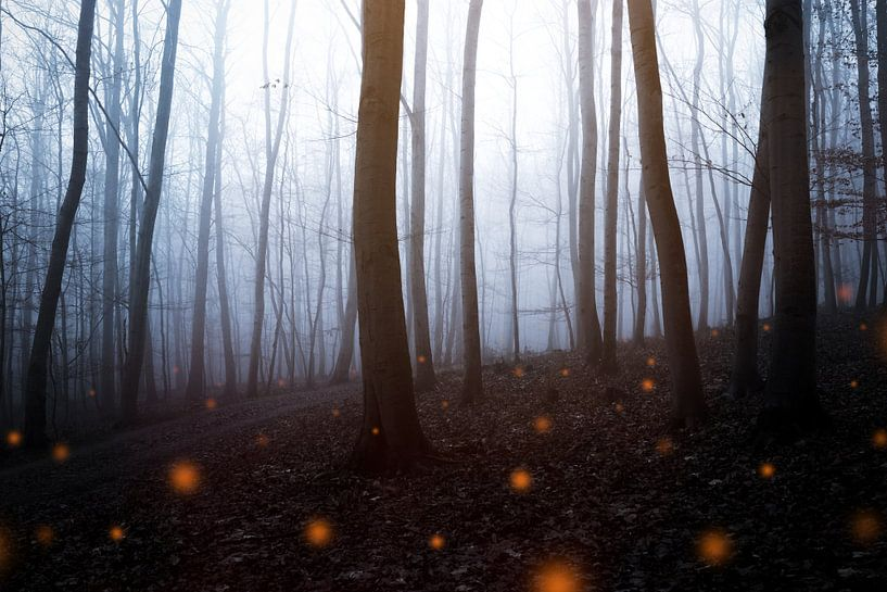 Mystischer Herbstwald van Oliver Henze