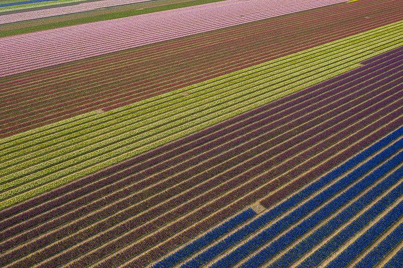 Een bloembollenveld van boven gezien van Menno Schaefer