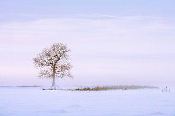 Eenzame boom van Marga Vroom