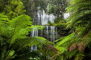 Schönster Wasserfall - Russell Falls - Tasmanien - Australien - Mount Field National Park