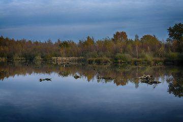 Herbst in der Groote Peel (Limburg) von FotoGraaG Hanneke