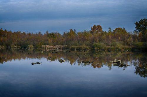 Herfst in de Groote Peel (Limburg)