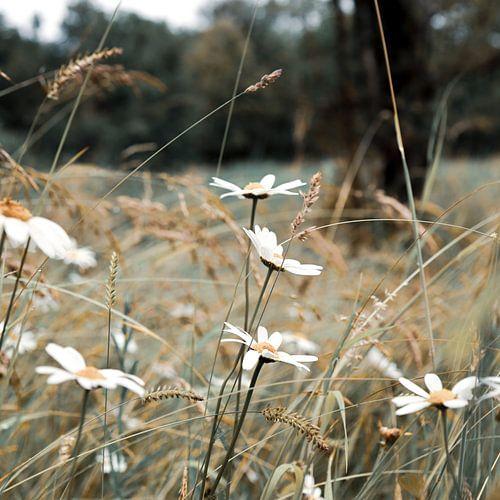 Meadow feelings