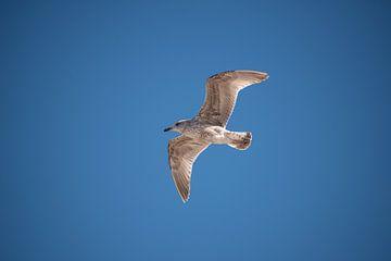 Fly away von Vanessa Mahn