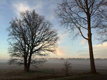 ochtend mist over westerwolde van Alfred Stenekes