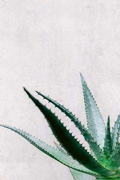 Aloe Vera Sukkulente an grauer Wand von Simone Neeling