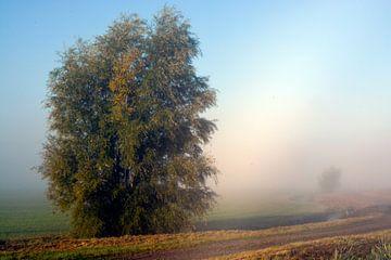 Heitere Landschaft im Morgennebel von Trinet Uzun