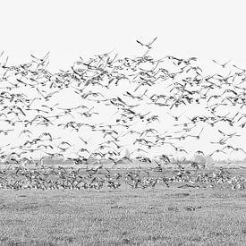 birds van Yvonne Blokland