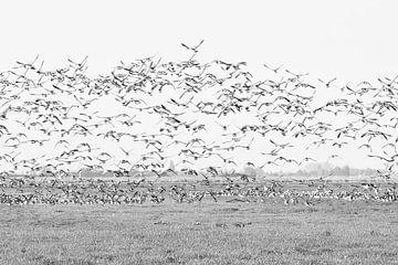 oiseaux  (birds) sur Yvonne Blokland