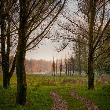 Ein Wald zum Leben, so schön. von Jenco van Zalk