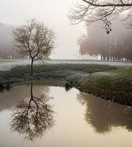Reflectie in de mist